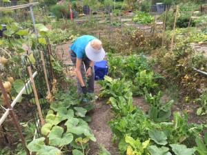 Working Gardener